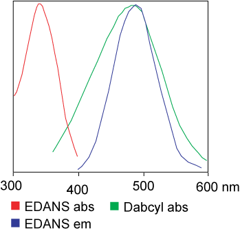 FRET Peptide synthesis: EDANS and Dabcyl