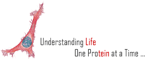 Understanding Life, one protein at a time